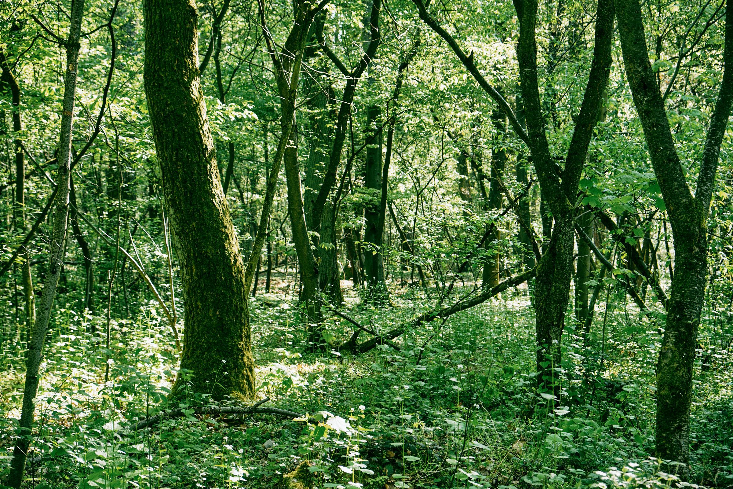 Darmstadt-Forest--0183.jpg