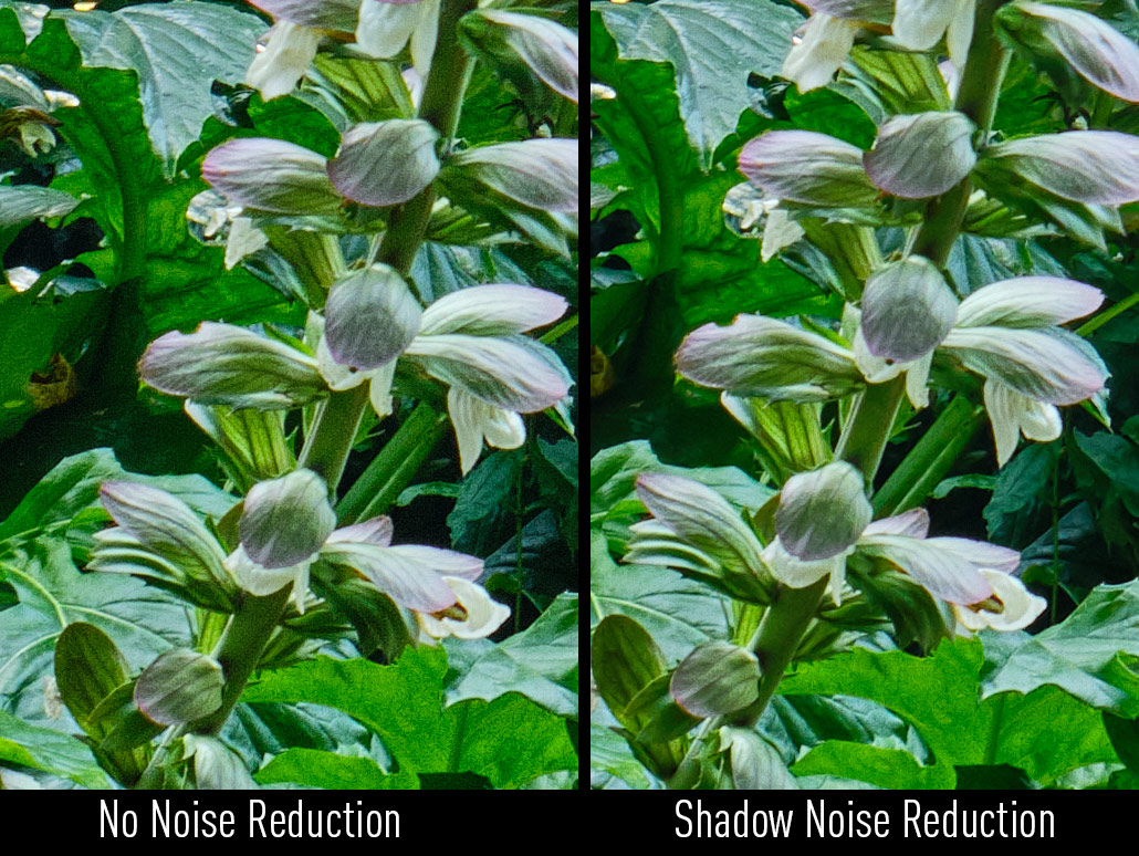 Reducing Shadow noise in Capture One, Before and After