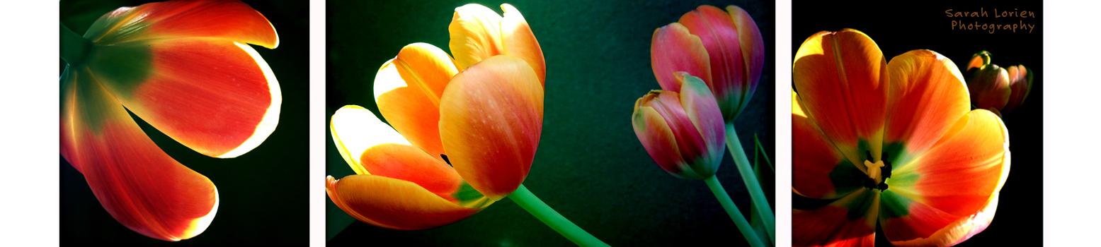 Sarah Lorien Photography Sydney - Lifestyle, Flowers