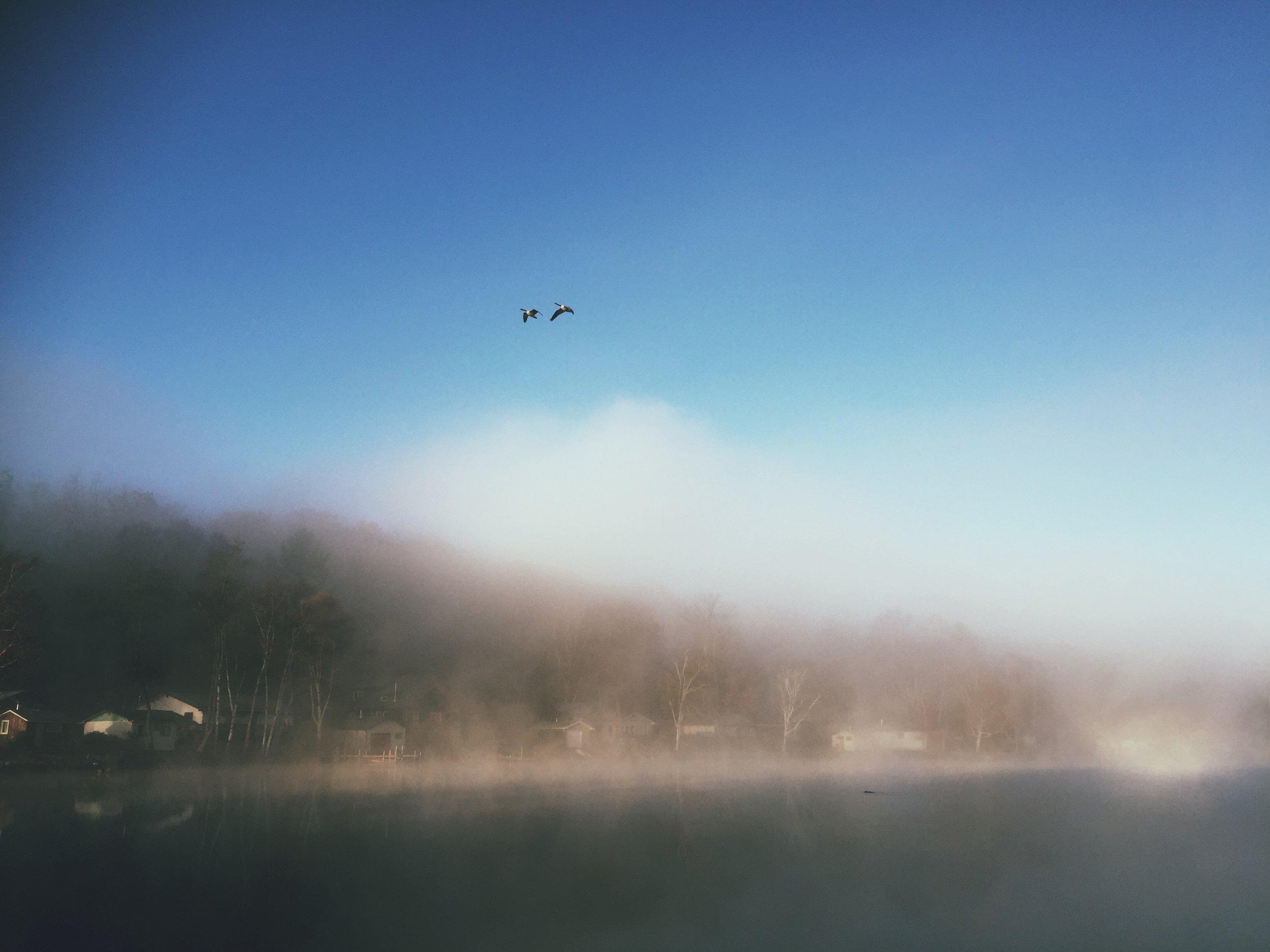 Gueese over river_morning mist.JPG