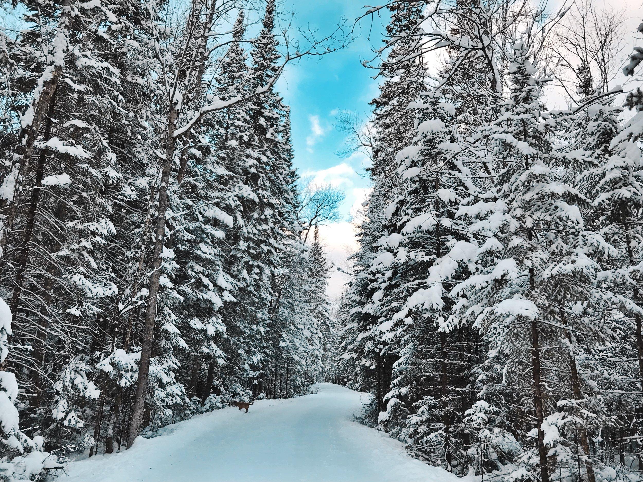Lake Road_Winter 2.jpg