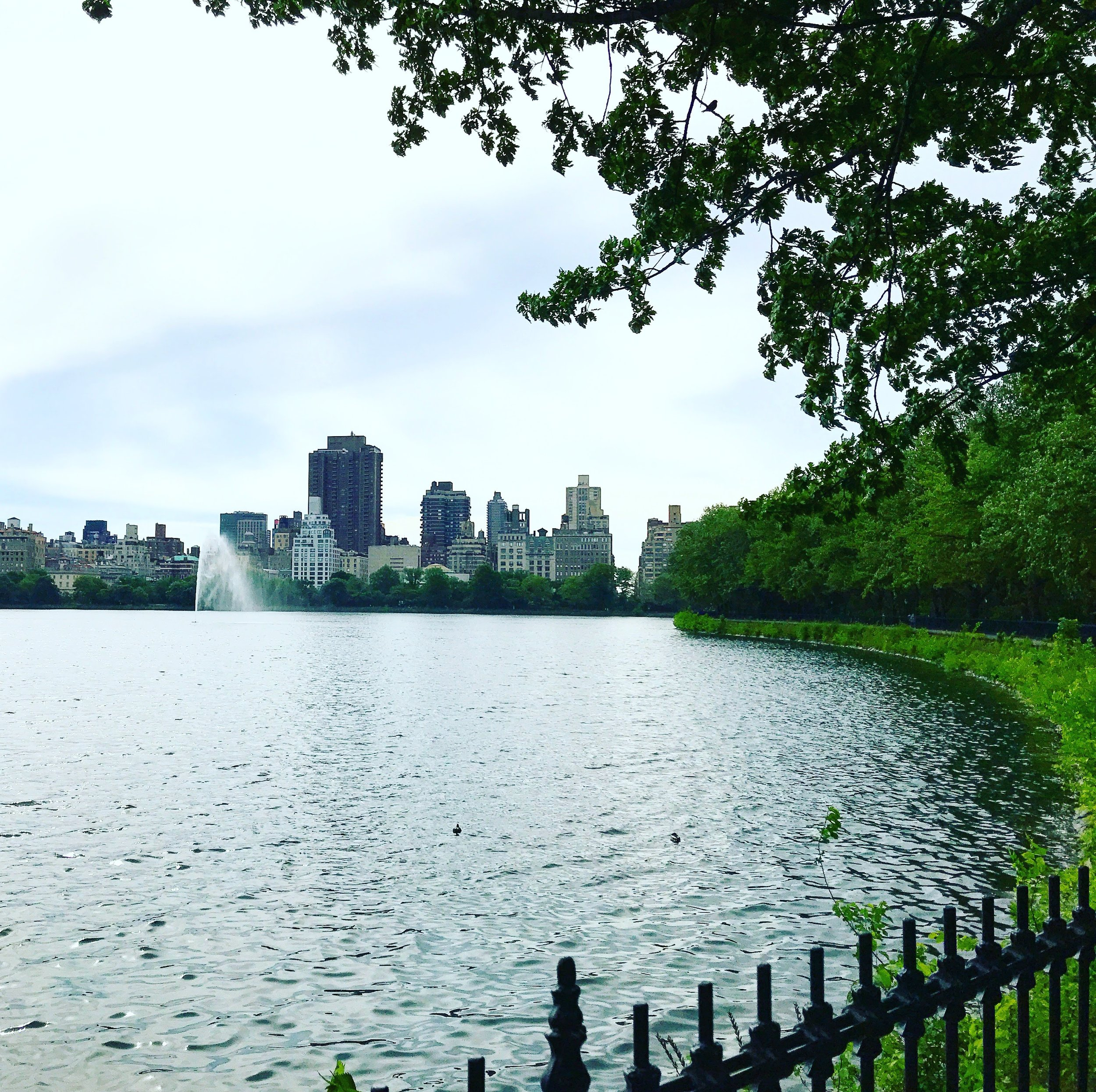 Nature! - A view of Central Park