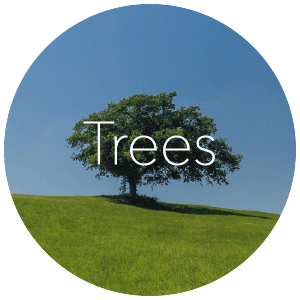 Trees_ReverseIcon.png
