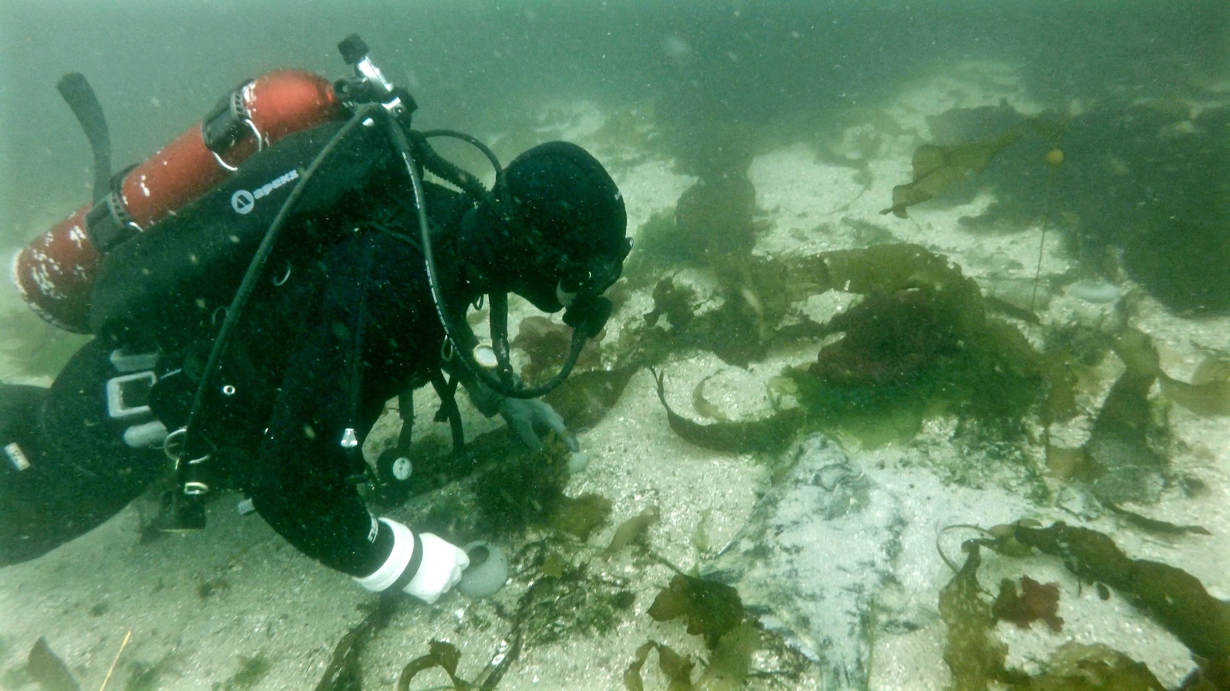D & Starry Flounder FL.jpg