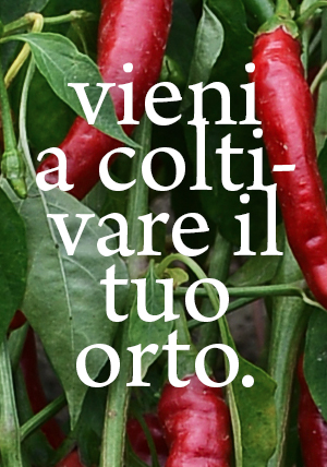 Non c'è nulla di più gratificante che coltivare il tuo proprio cibo. Ogni cottage ed appartamento hanno un  ...