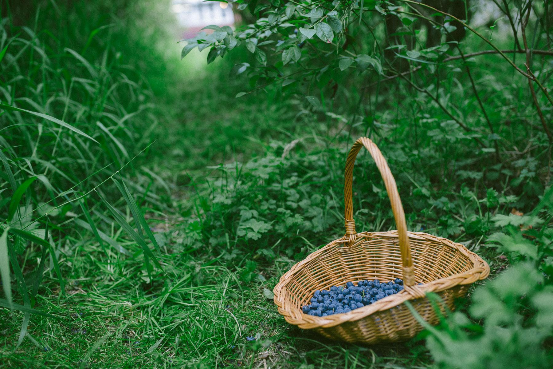 blueberries-3677.jpg