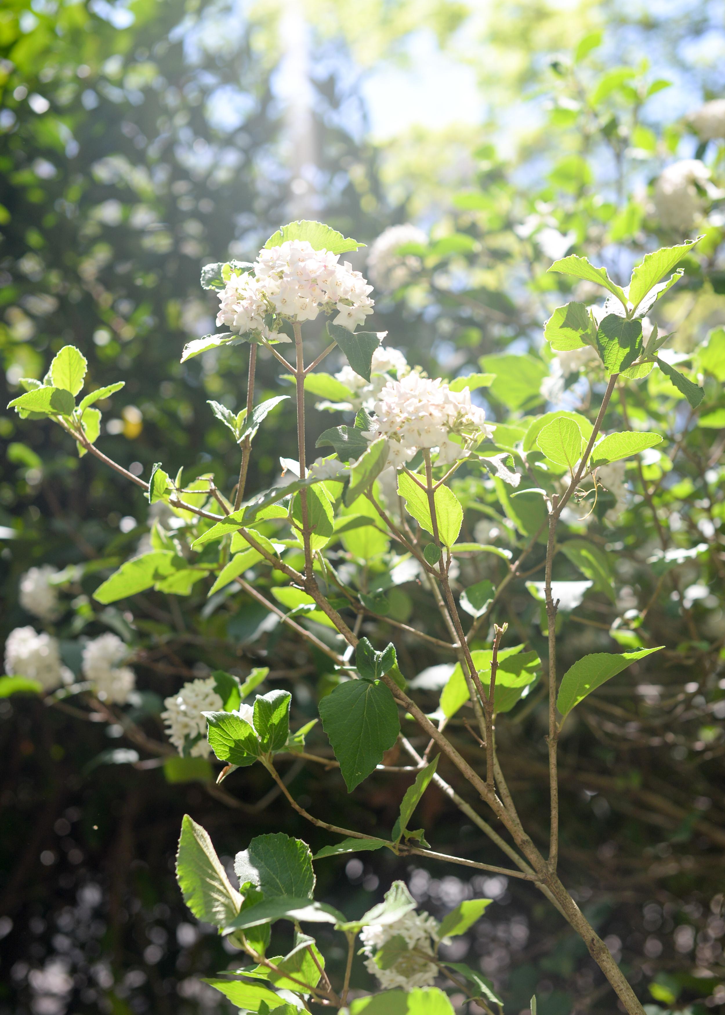 150404_hkp_botanicalgardens019.jpg