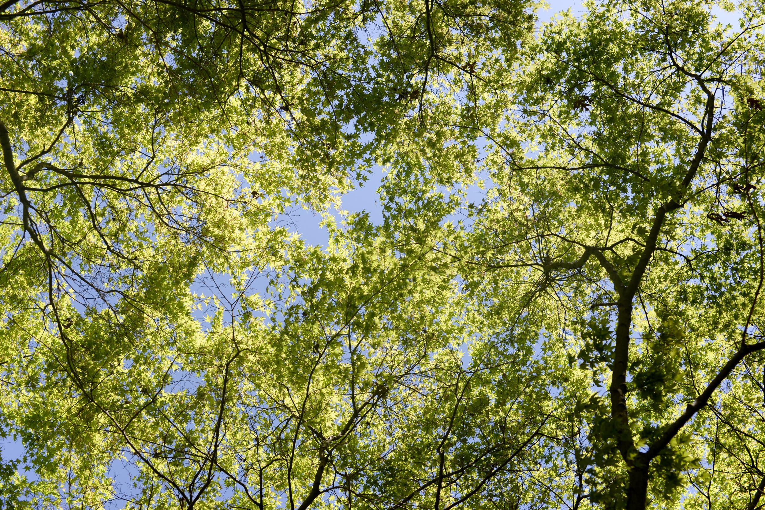 150404_hkp_botanicalgardens021.jpg