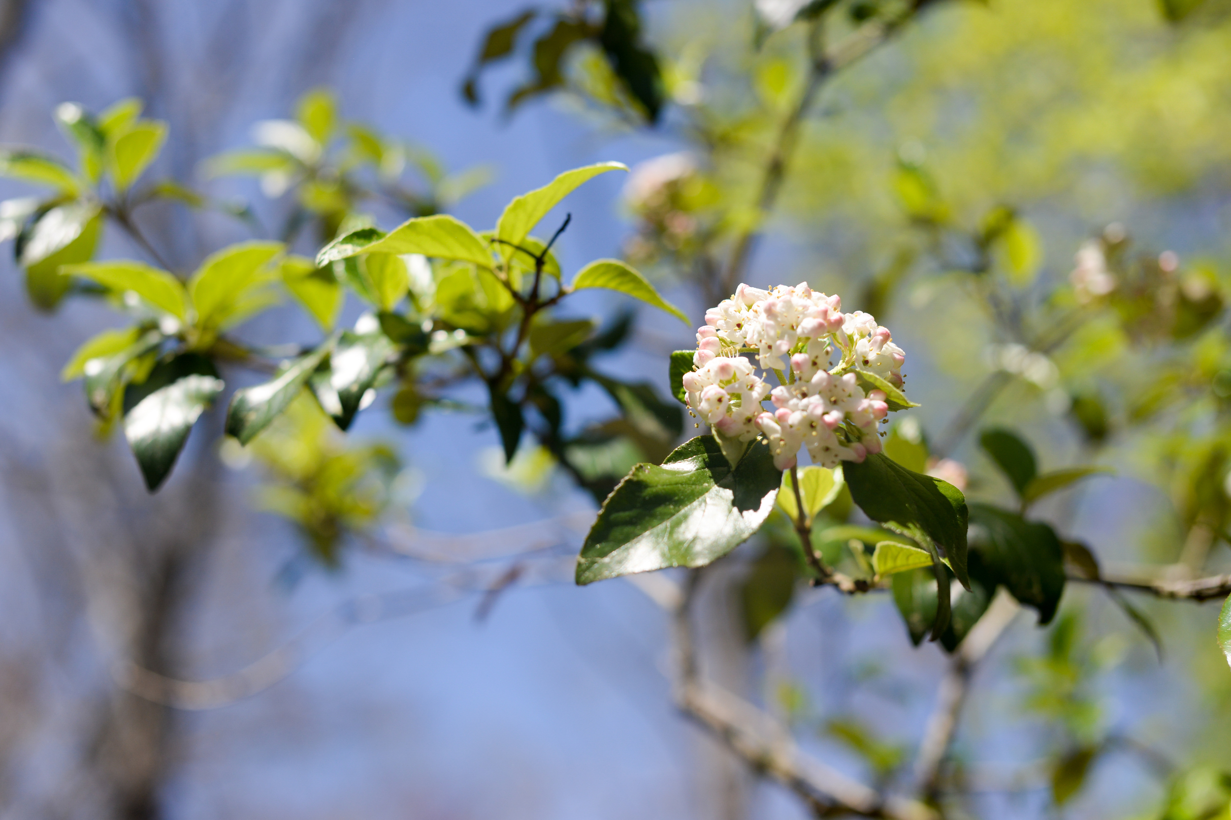 150404_hkp_botanicalgardens016.jpg