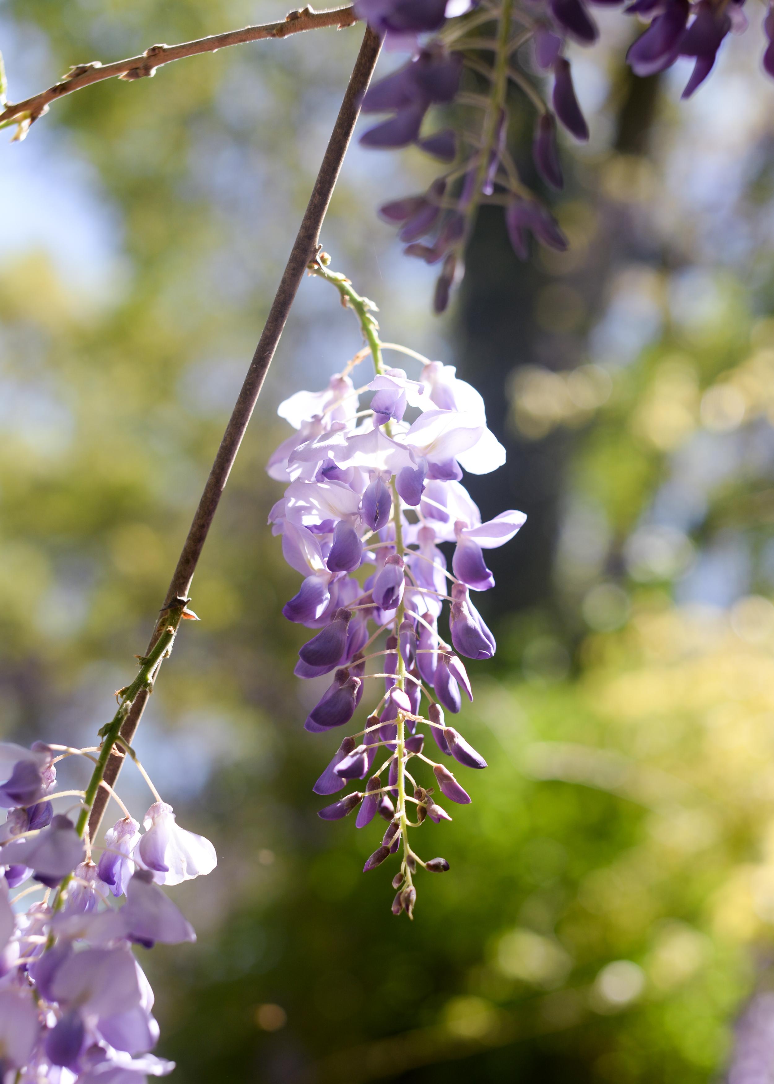 150404_hkp_botanicalgardens041.jpg