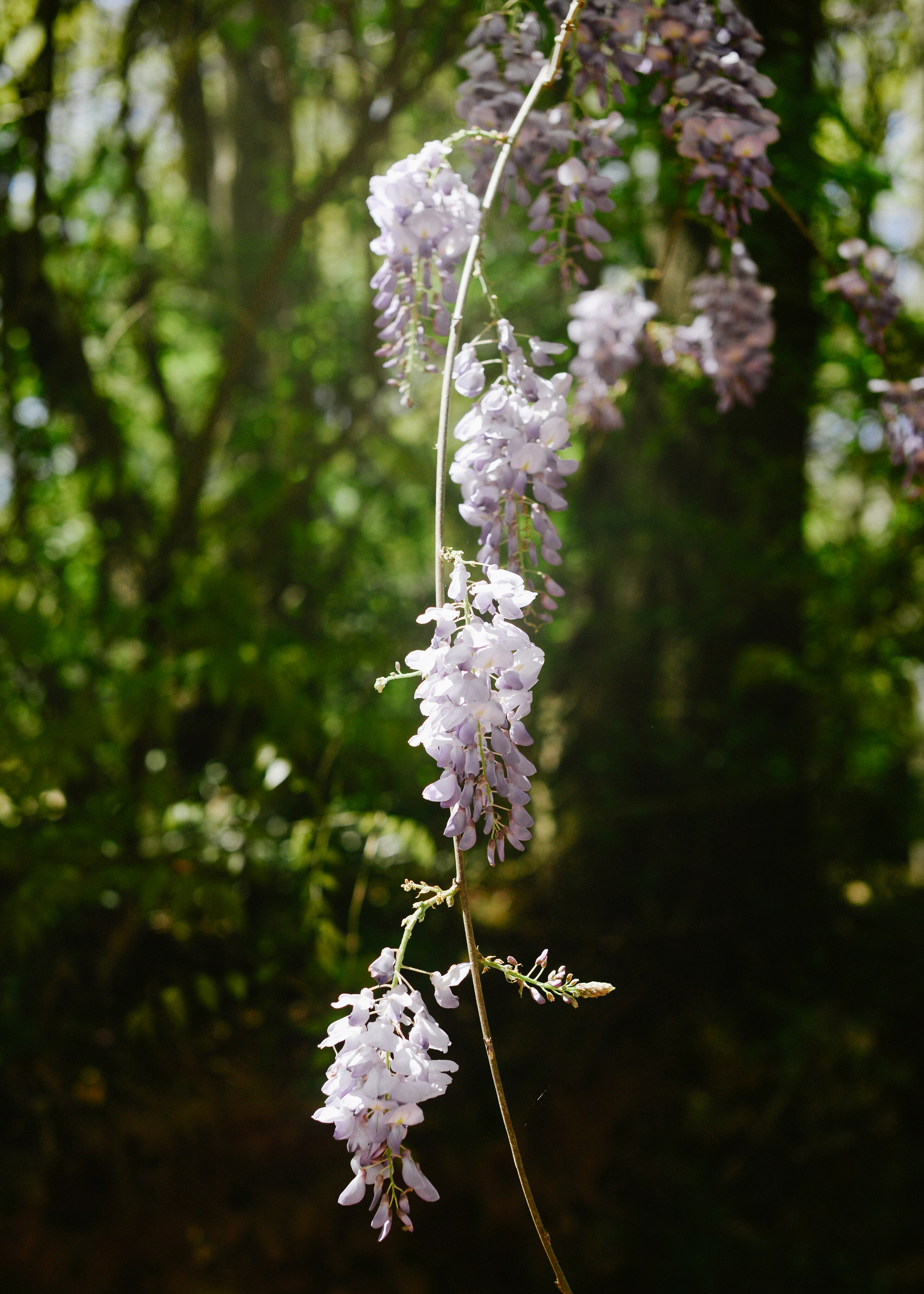 150404_hkp_botanicalgardens046.jpg