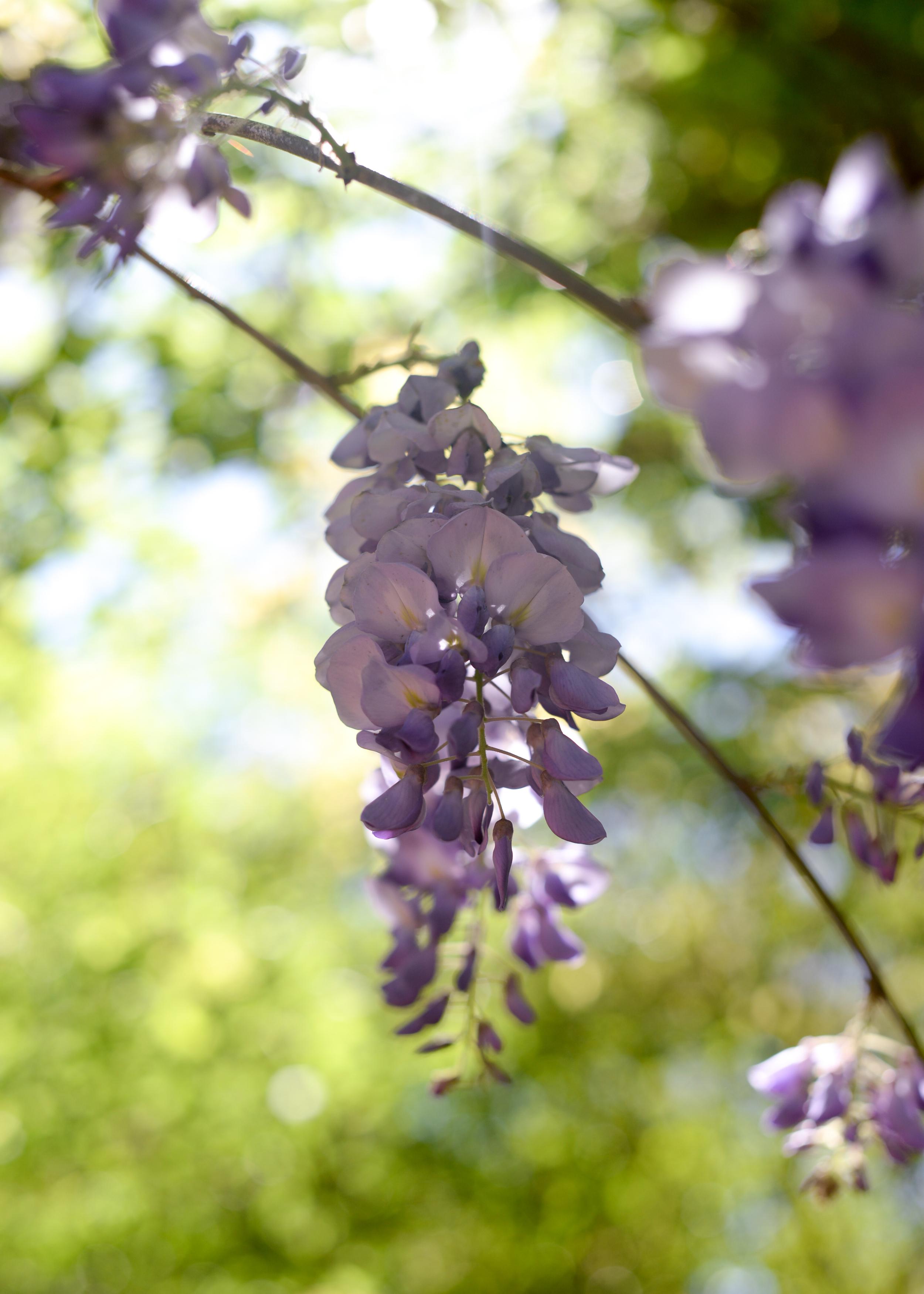 150404_hkp_botanicalgardens042.jpg