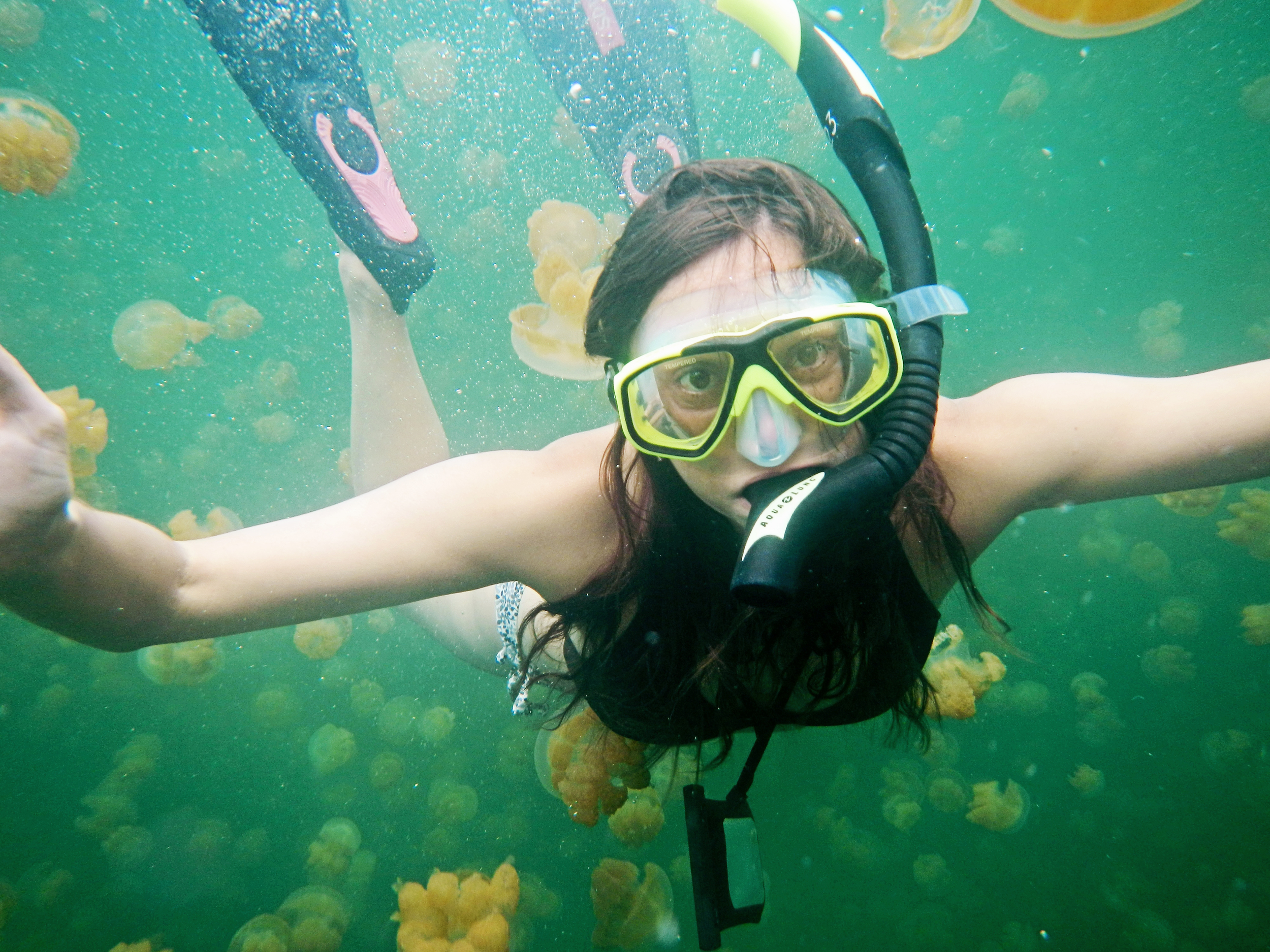 Jellyfish Lake, Palau, Micronesia