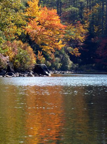 Autumn foliage.png