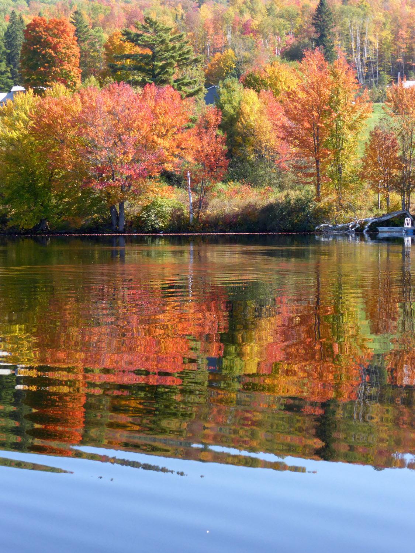 Autumn foliage.jpg