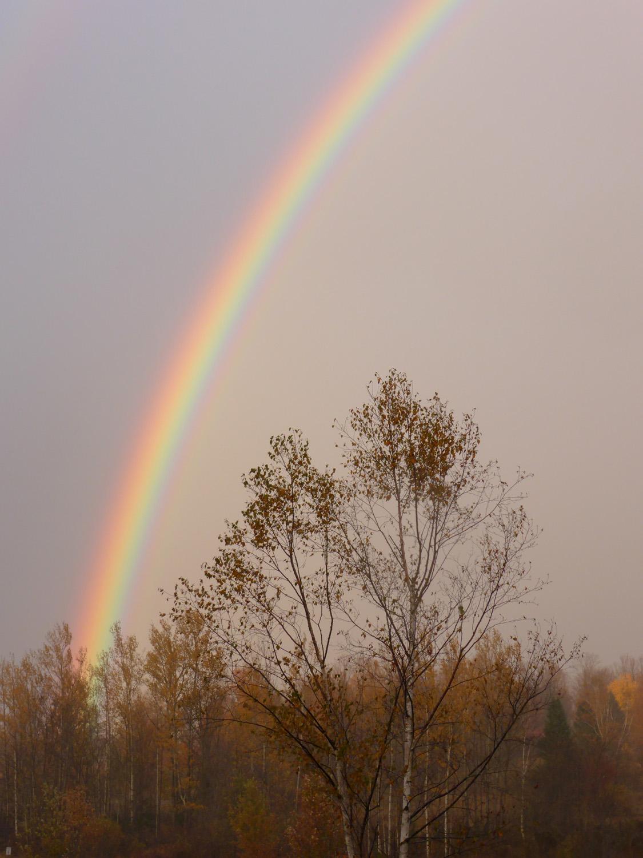 Autumn Rainbow_tree.jpg