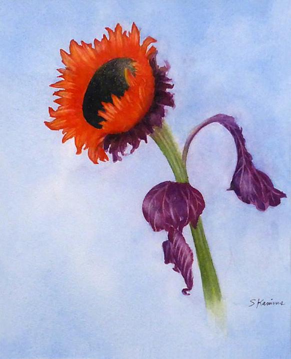 Red Sunflower,  11 x 14