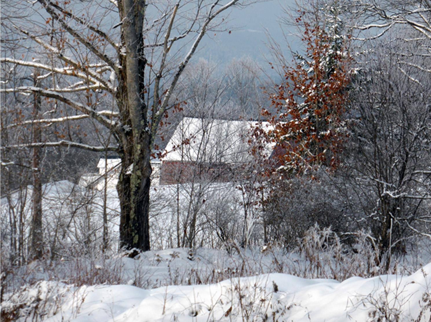 Sandy Kamins_Winter_Red Leaves_Barn.jpg
