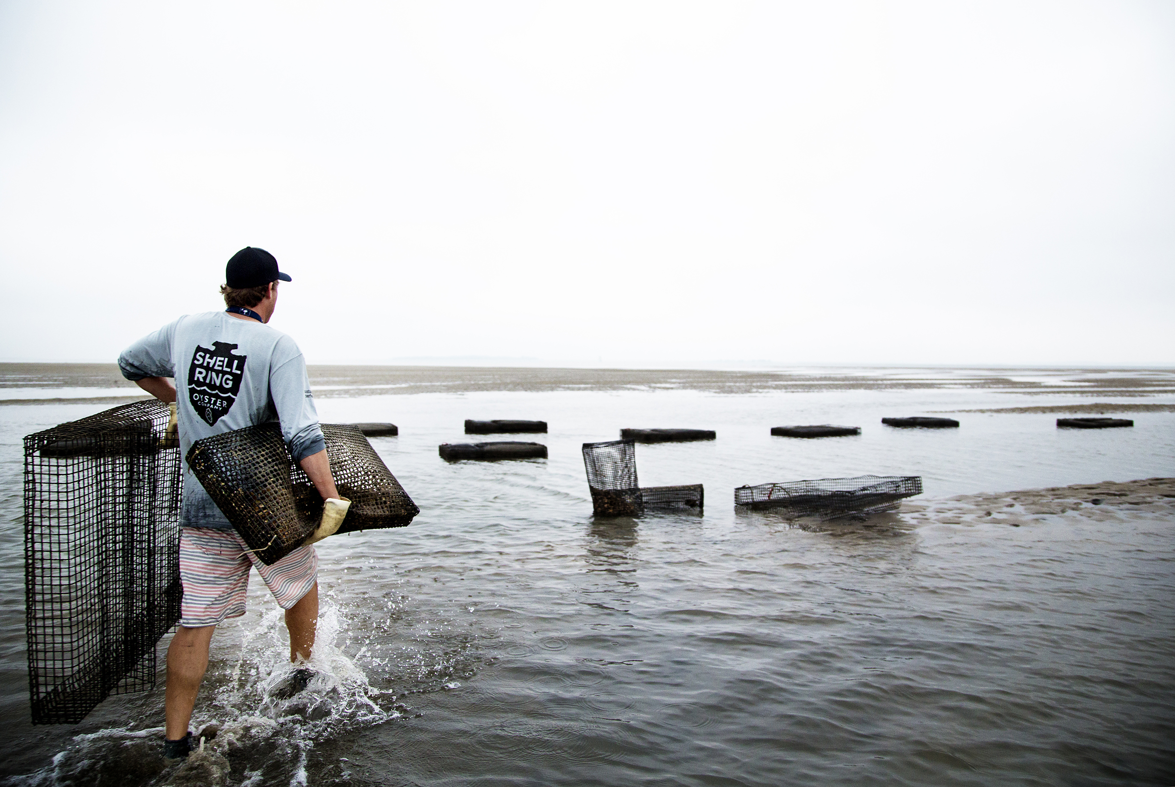 Andrew Carmines harvesting oysters