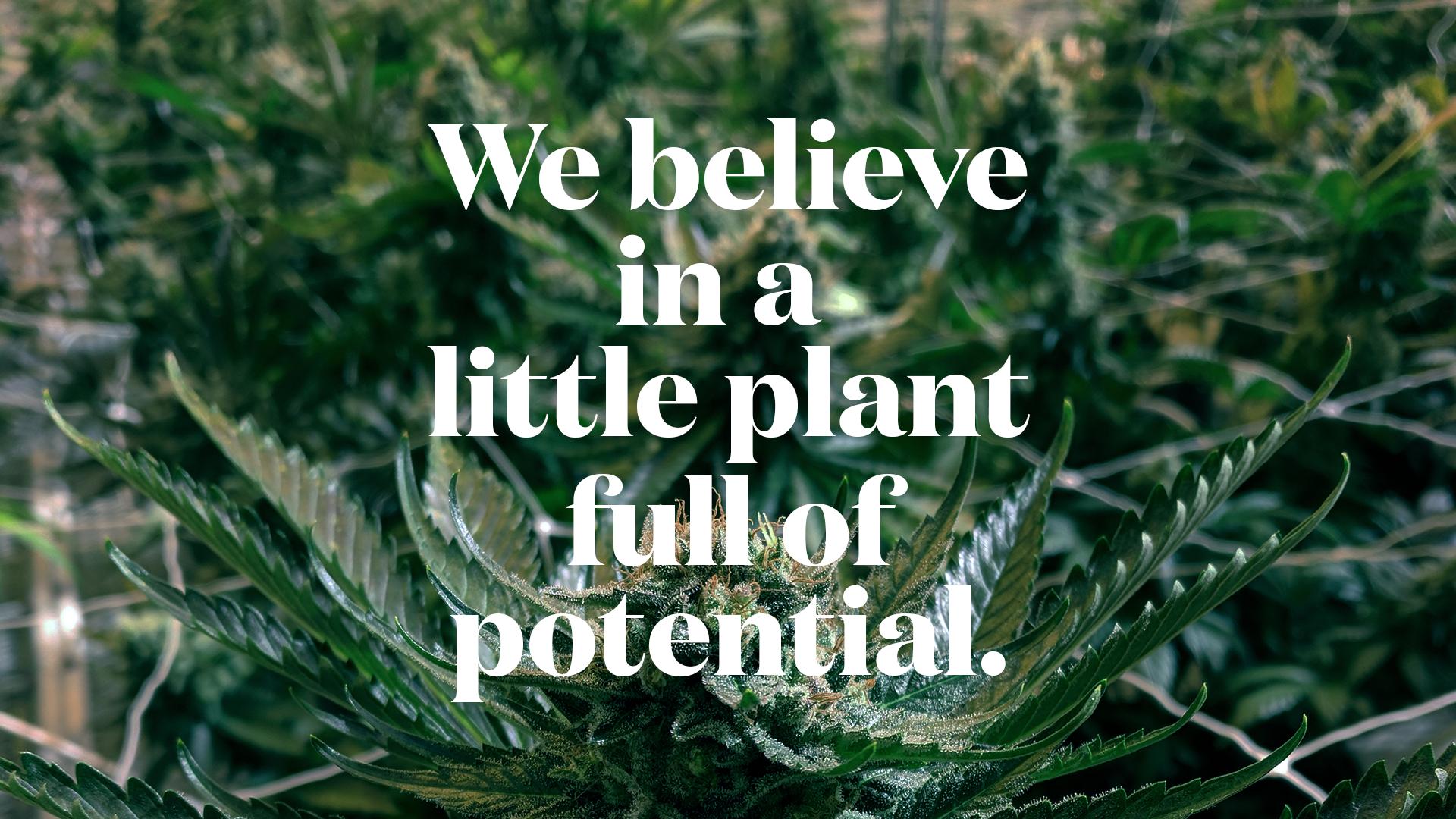 Grown Modern w pot.png