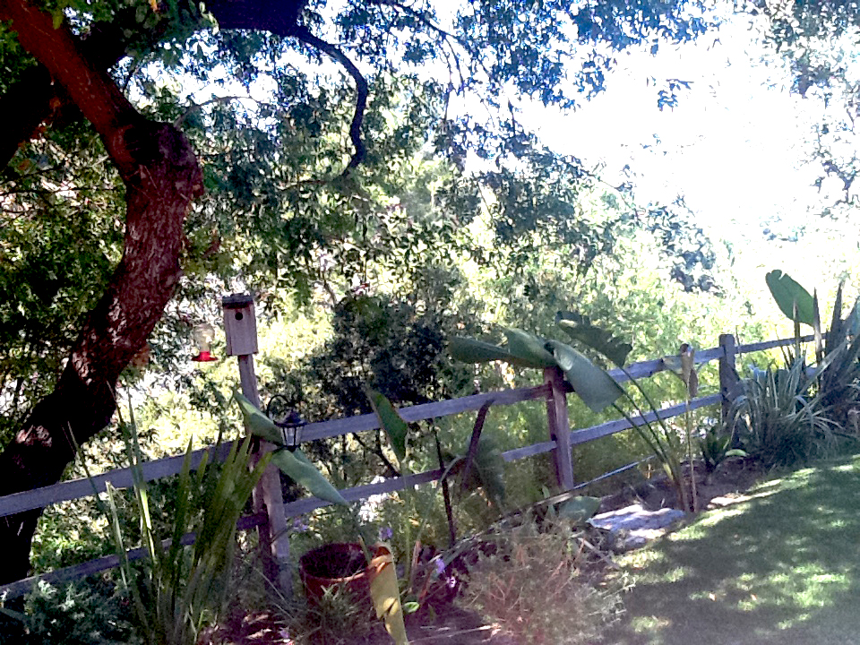 Before | Rear Hillside Property Fence Line