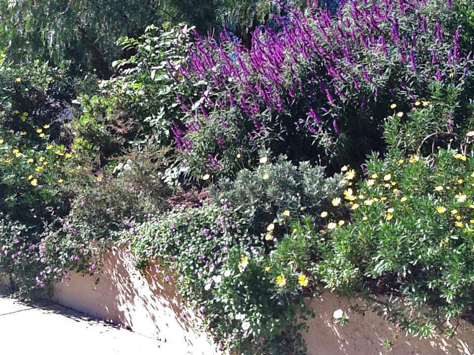 Before | Front Property Sidewalk Garden Wall