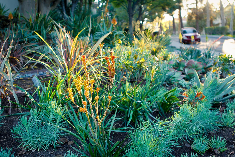 After | Succulent Garden