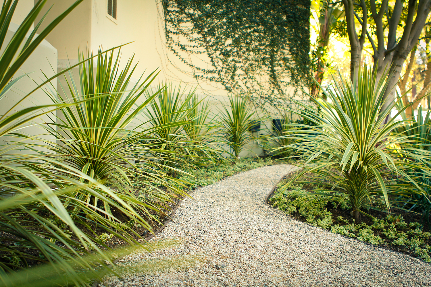 After | Cordyline Pathway