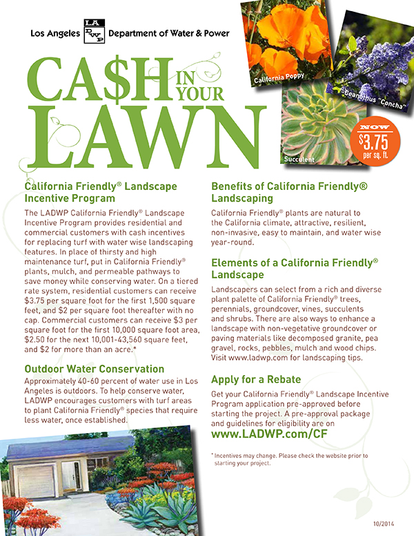 DWP Cash for Turf