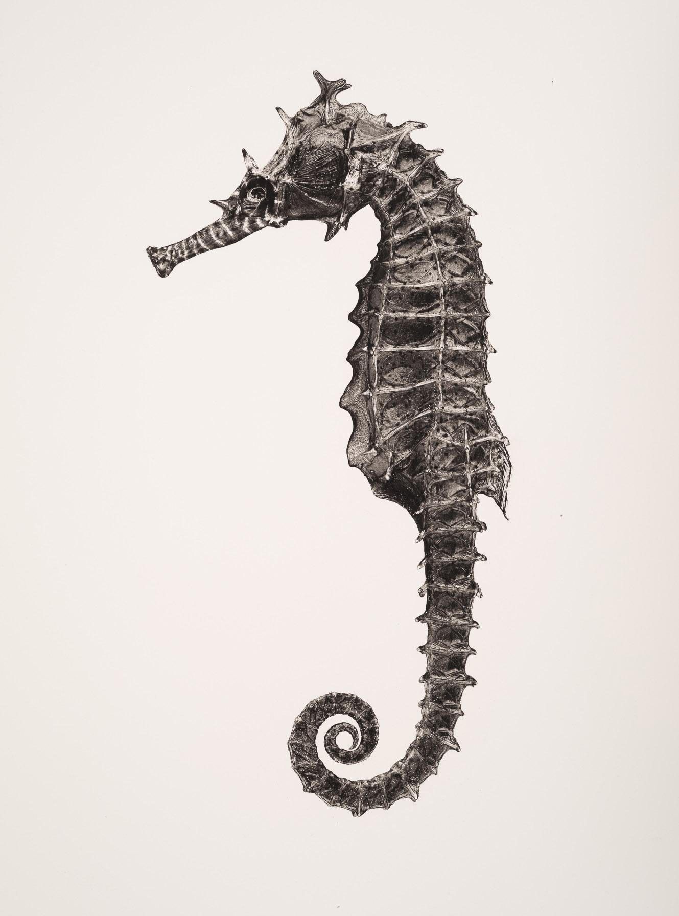 jan c schlegel -creatures of the seven seas - 16.jpg