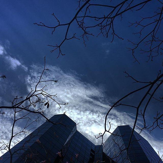 #lookingup #losangeles #whilshire #sunday #skatetowork #california #lookingup_architecture #blueskies