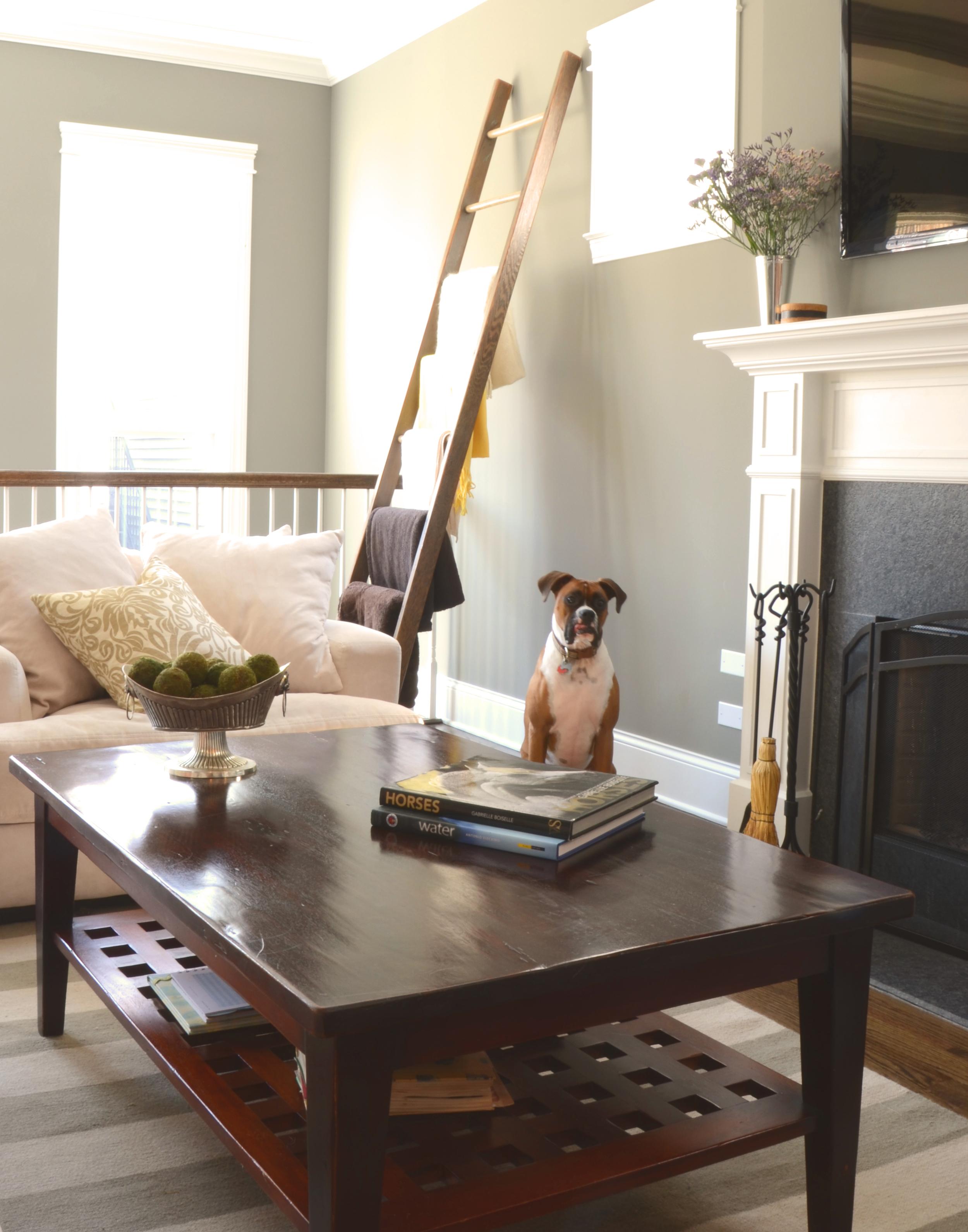 dog livingroom cropped.jpg