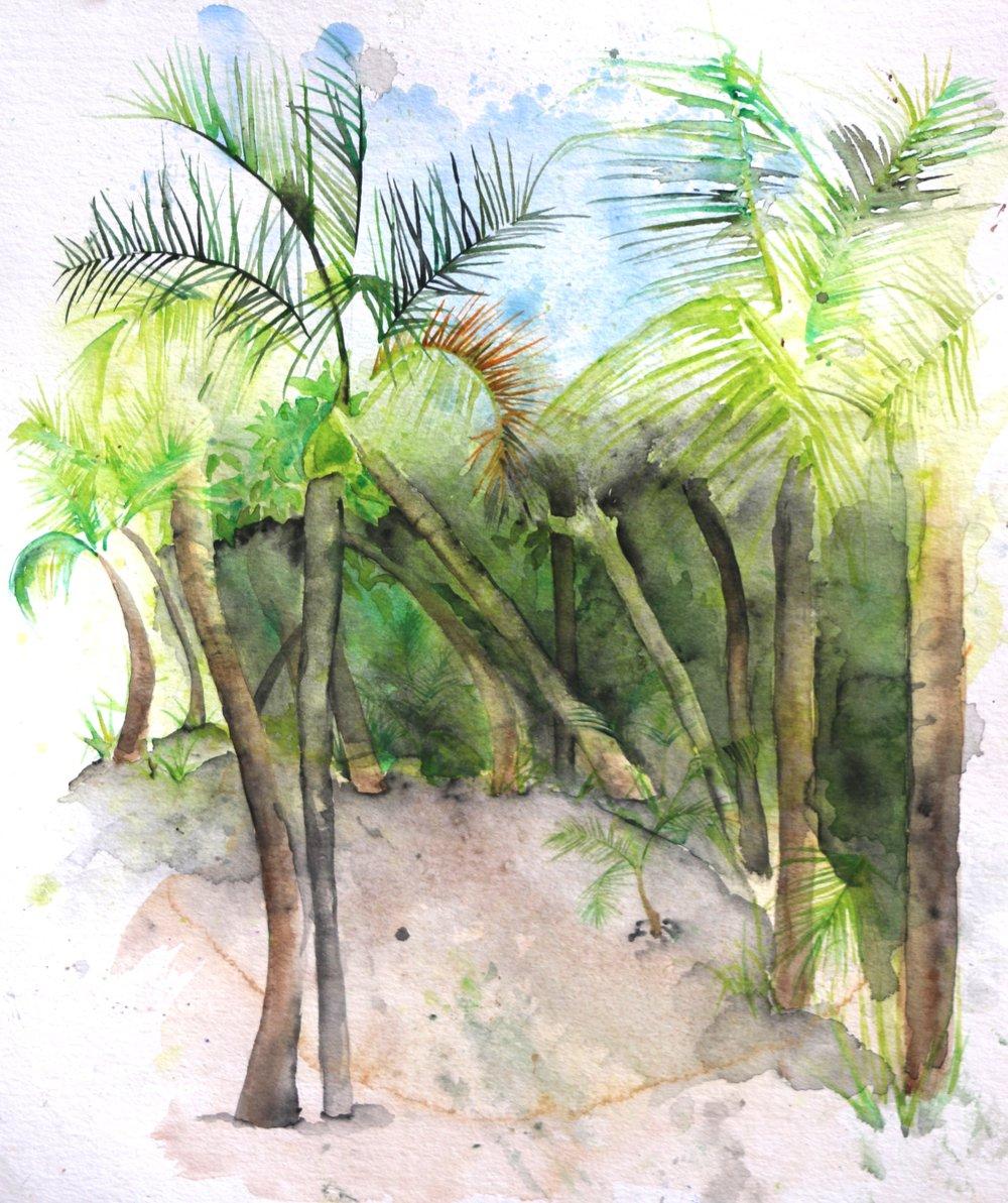 Trade Wind Breeze Watercolor.jpg