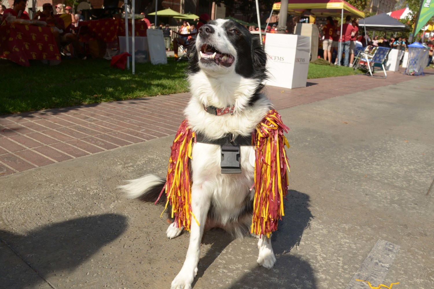 Apparently Southern Cal has a dog mascot named Yosemite. Yosemite National Park being located, of course, in Downtown Los Angeles.