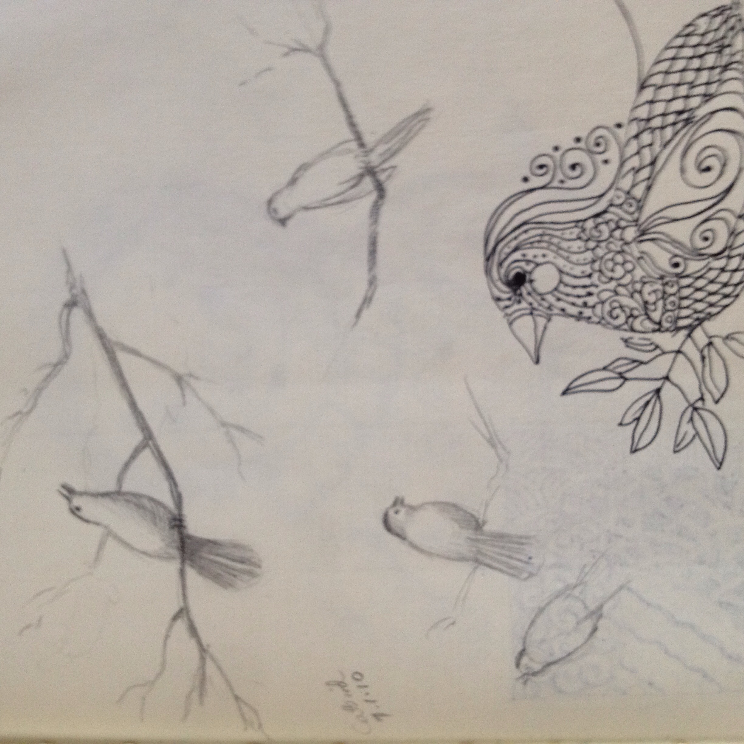 Bird sketches from life and imagination