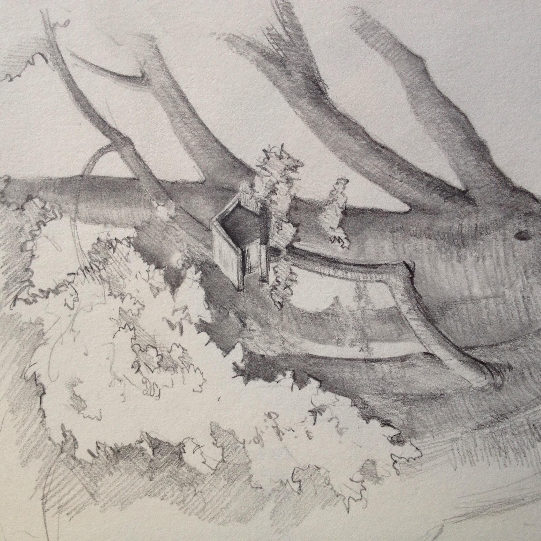 Bird feeder in the maple tree