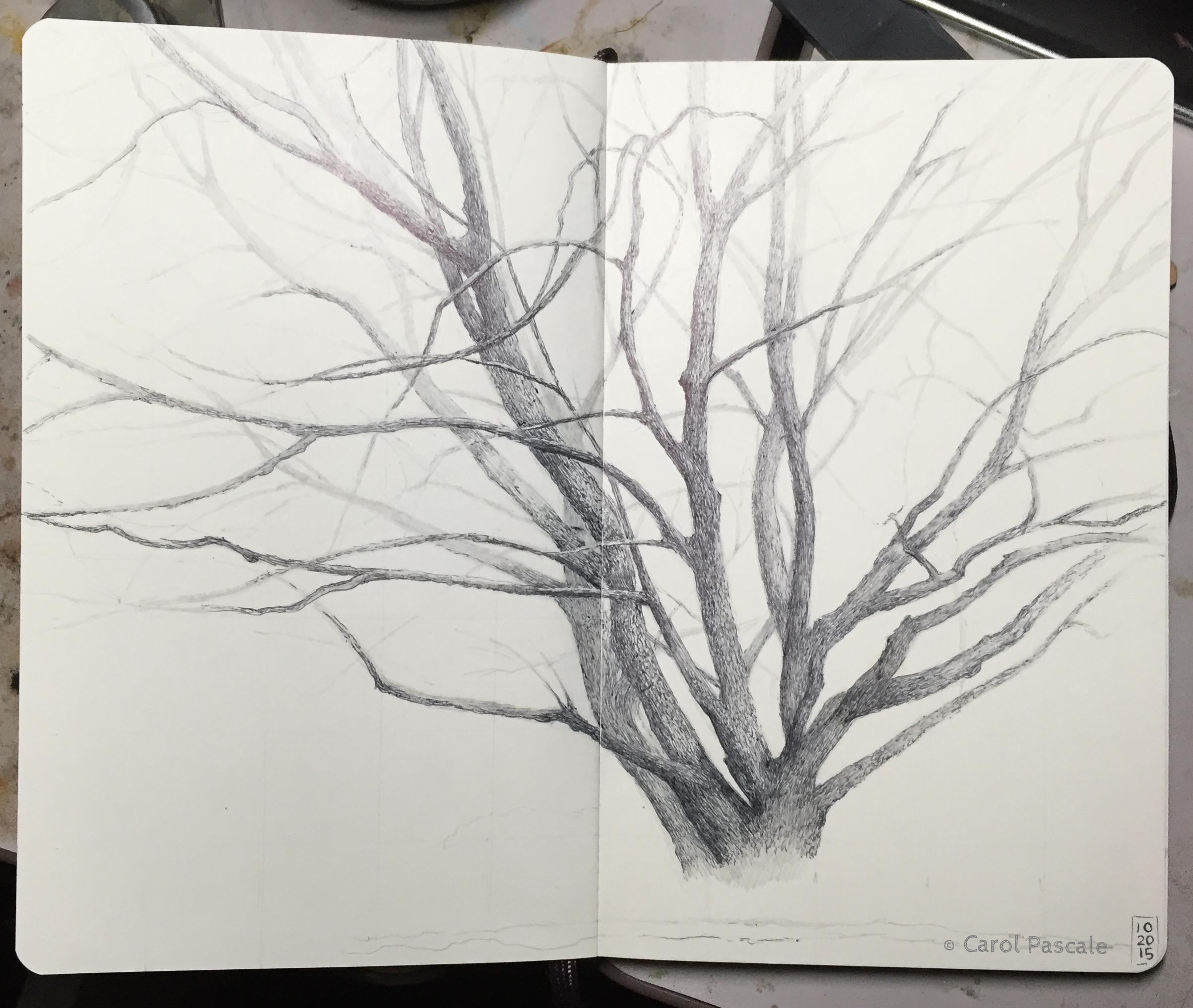 Ballpoint pen drawing of a maple tree in winter