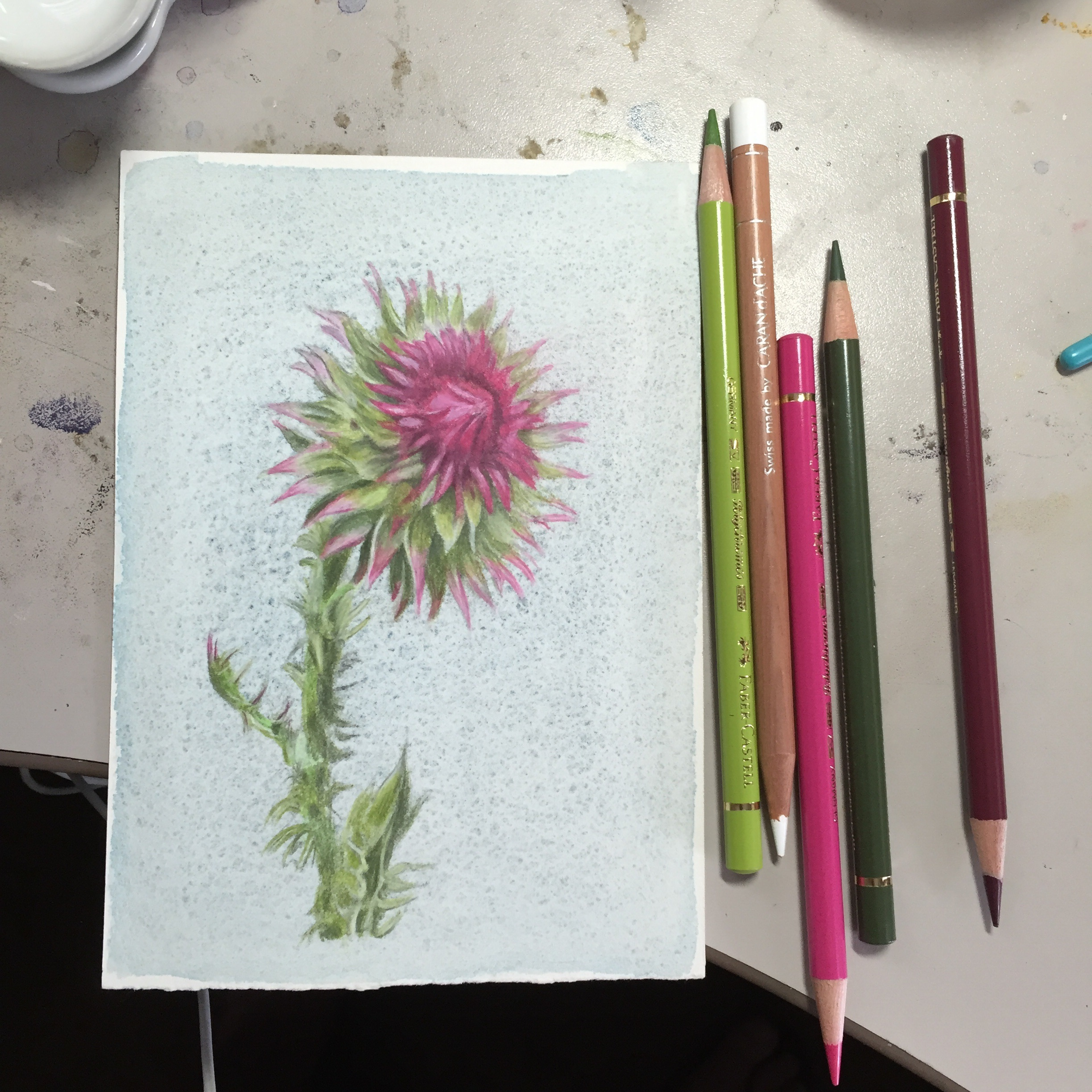 Carduus Nutans (Musk Thistle), watercolor and colored pencil, 4.5 x 6.5""