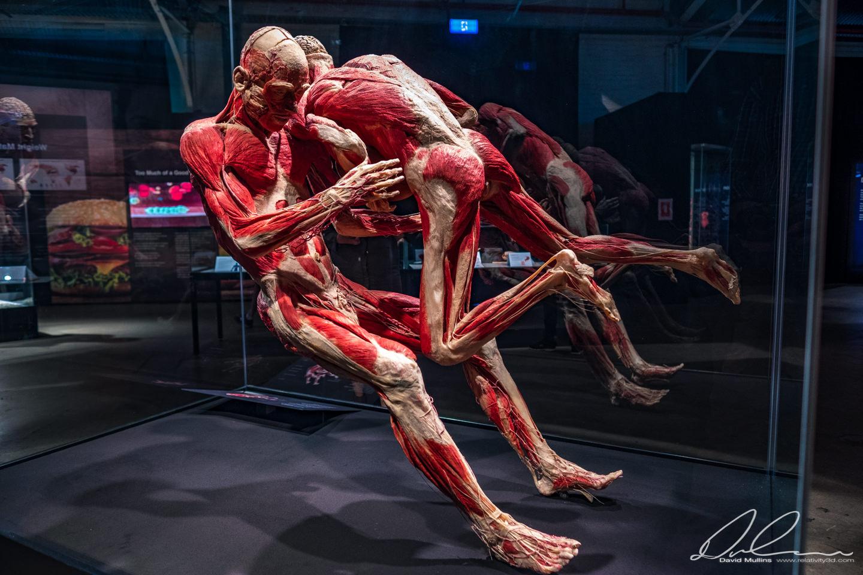 BODY WORLDS Vital-148.jpg