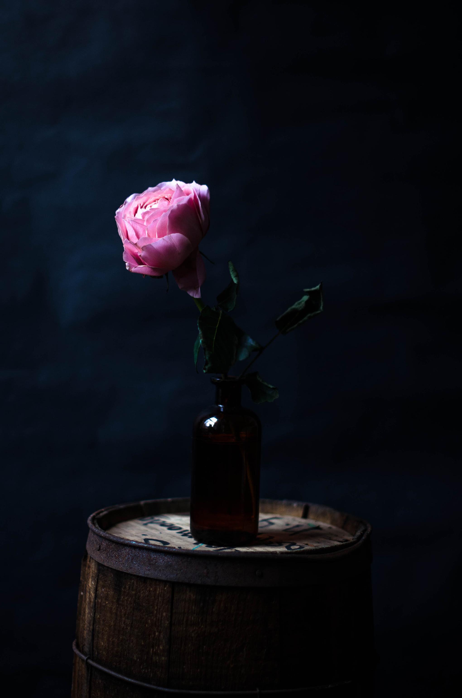ROSE & IVY JOURNAL PETAL BY PETAL ROMANTIC ANTIK ROSE