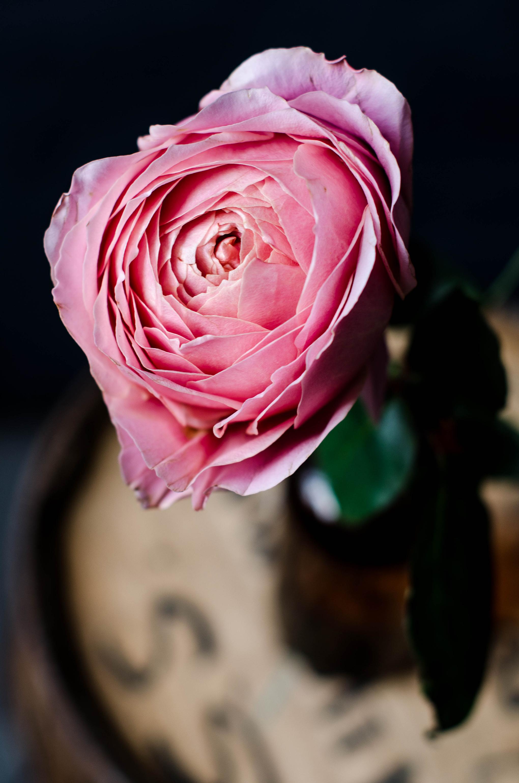ROSE & IVY JOURNAL ROMANTIC ANTIKE ROSE