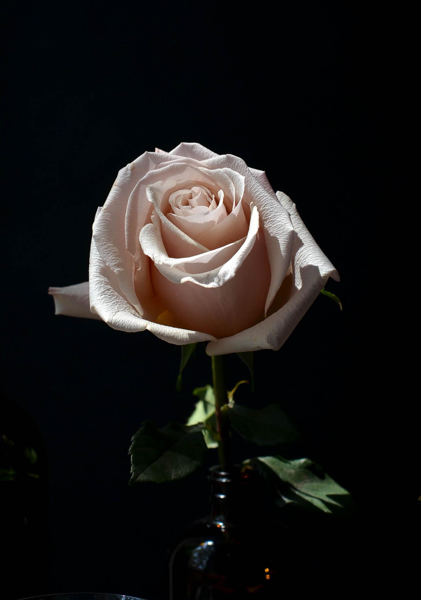 ROSE & IVY JOURNAL PLUM & ROSE TART