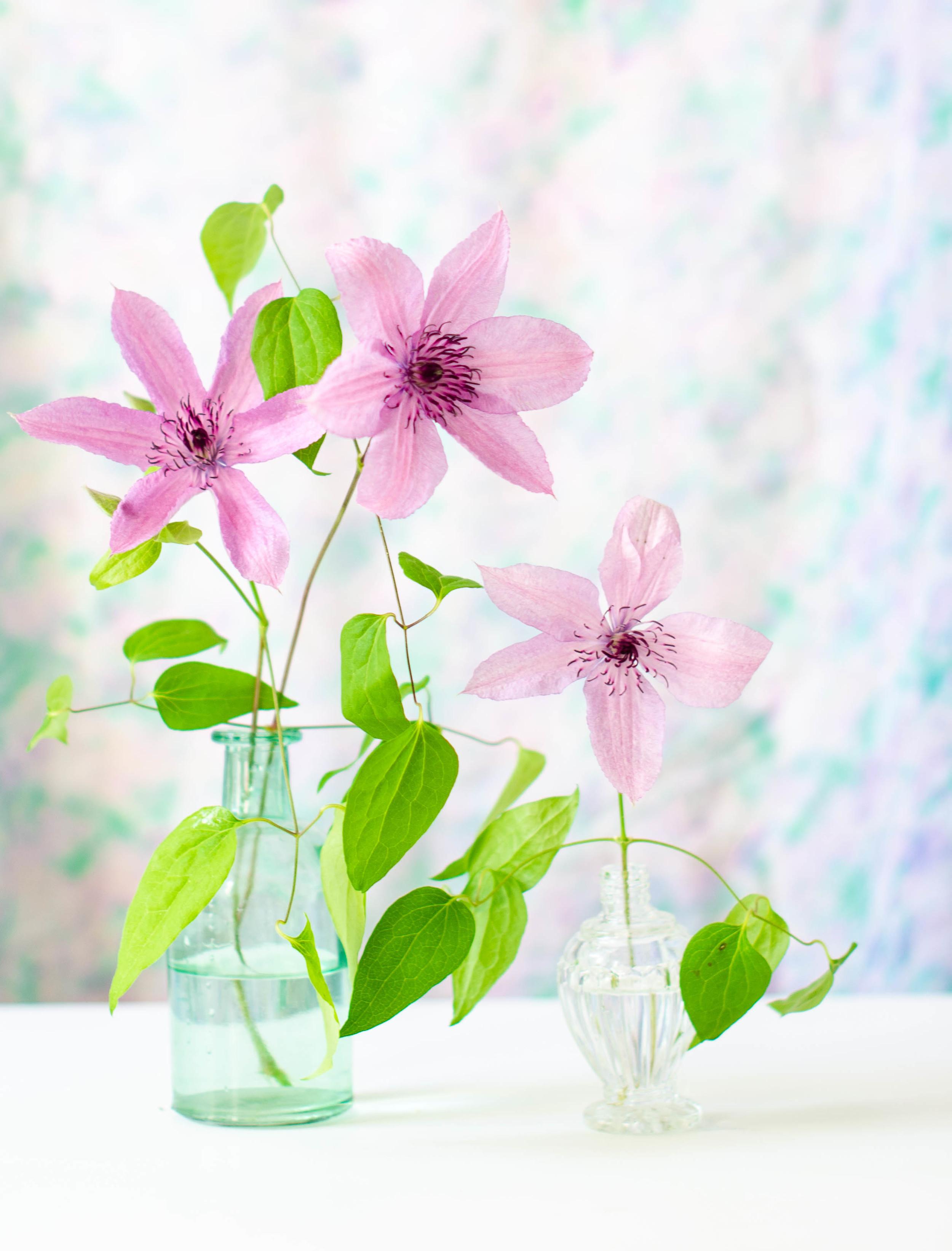 rose & ivy journal petal by petal pink chiffon clematis