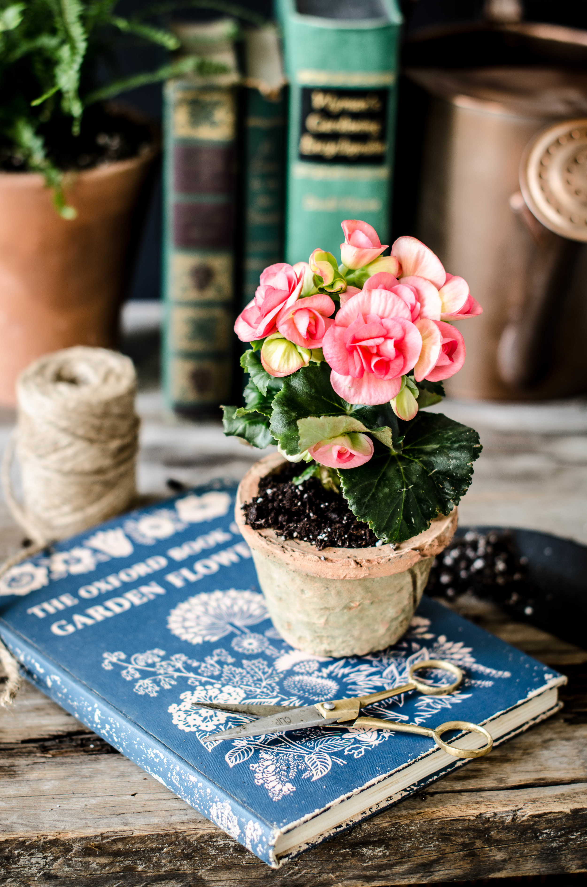 rose & ivy journal the gardening table