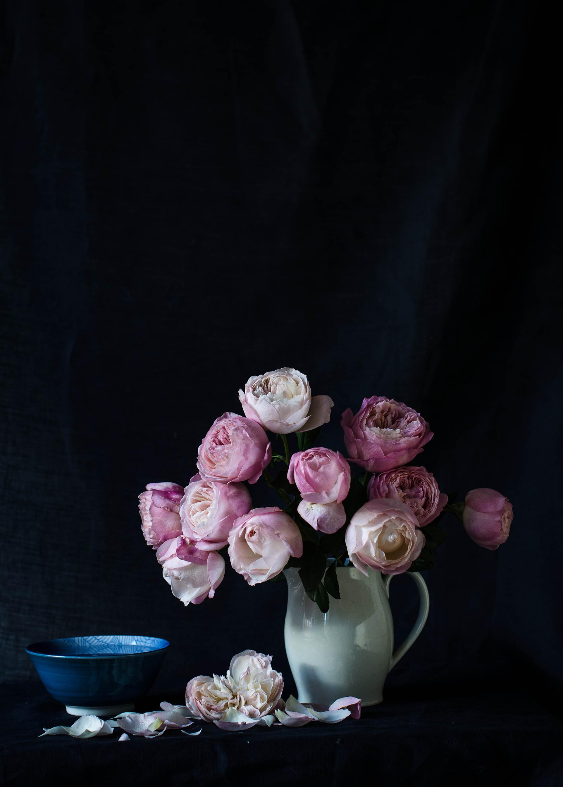 'Constance' Garden Rose