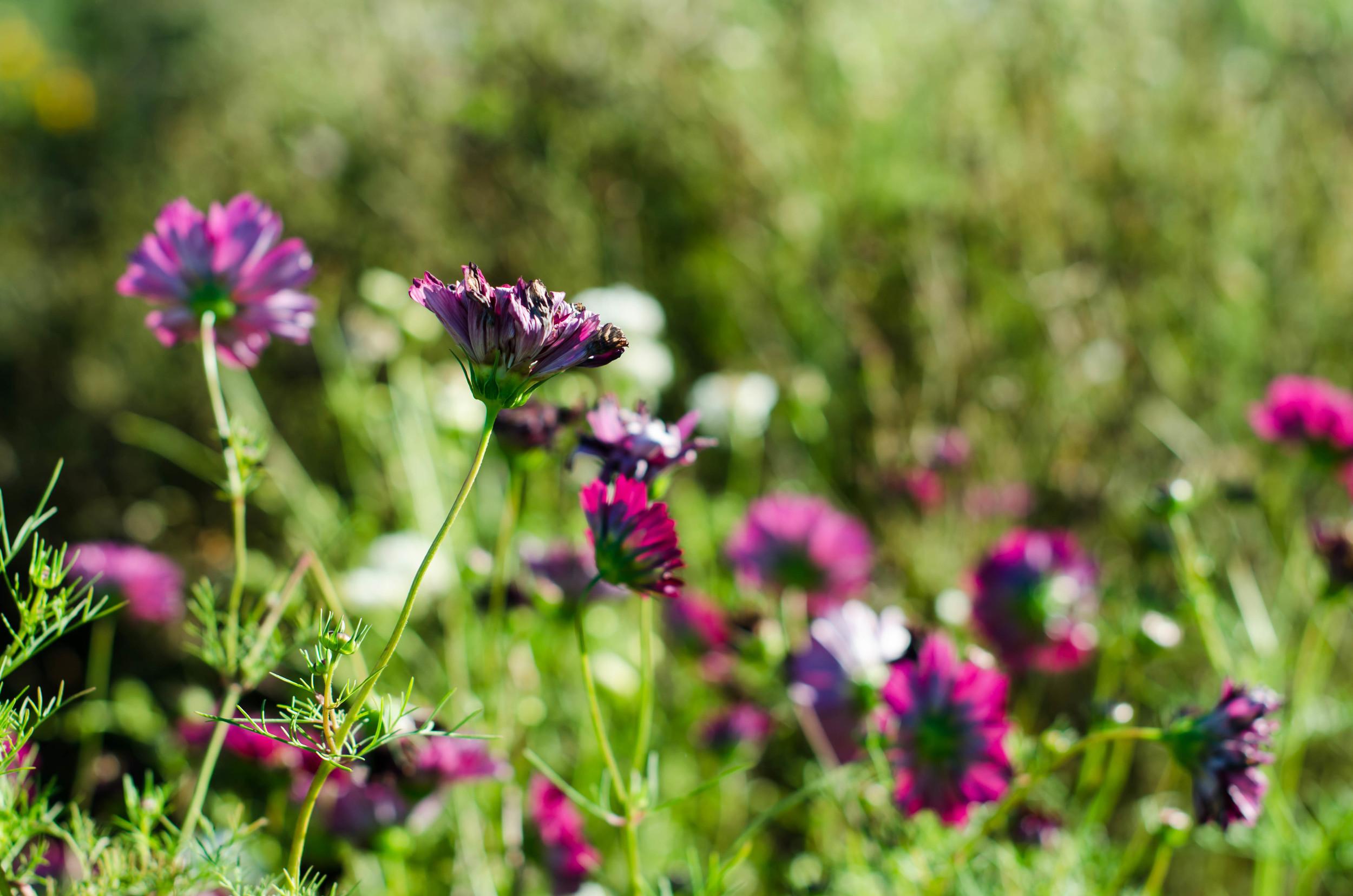 ROSE & IVY Journal Wildflower Fields