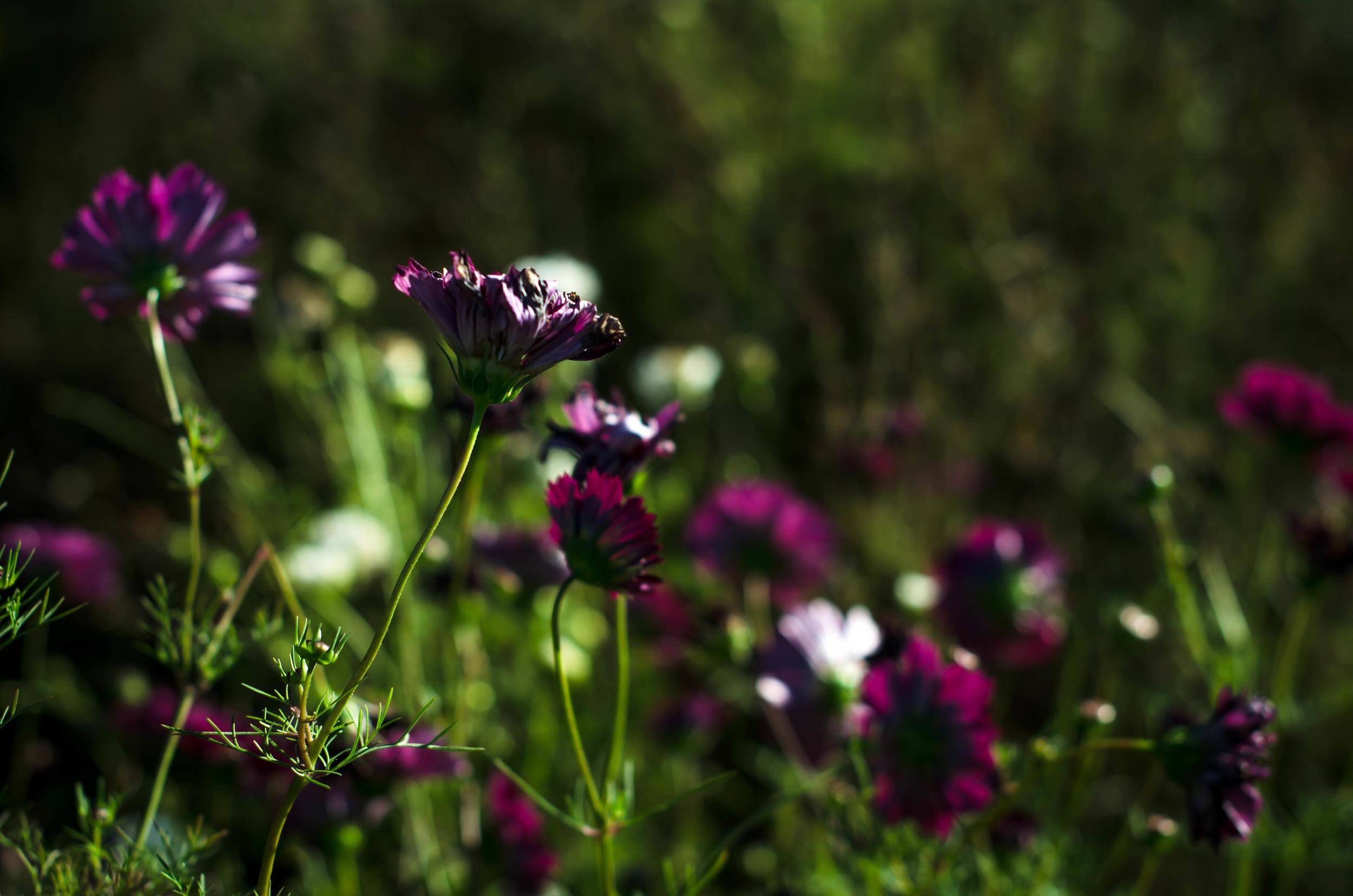 ROSE & IVY Journal Fields of Flowers