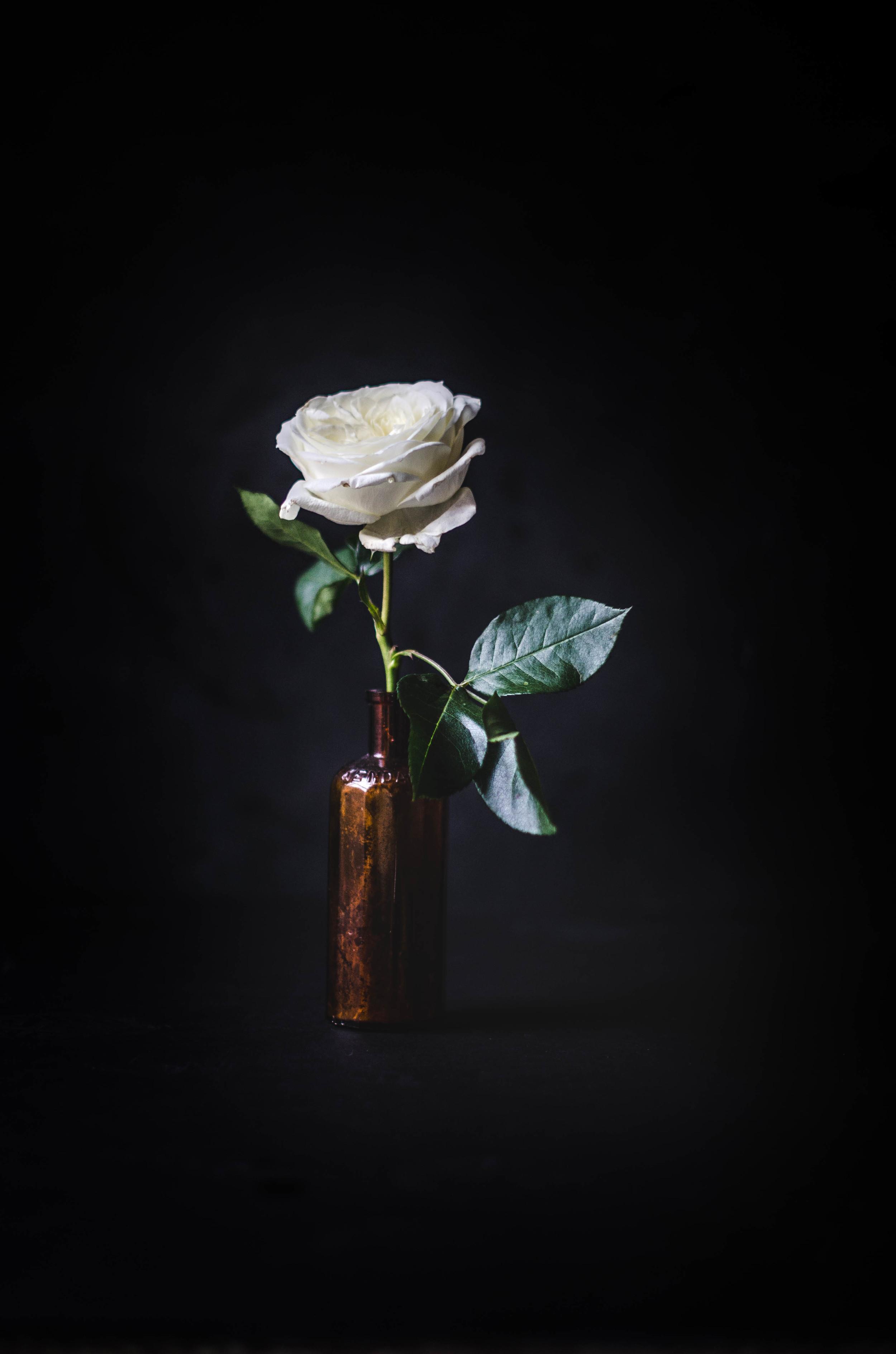 ROSE & IVY Journal Petal by Petal Alabaster Garden Rose