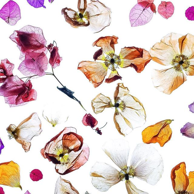 ROSE & IVY Journal Insta Love Flowers of Visalia