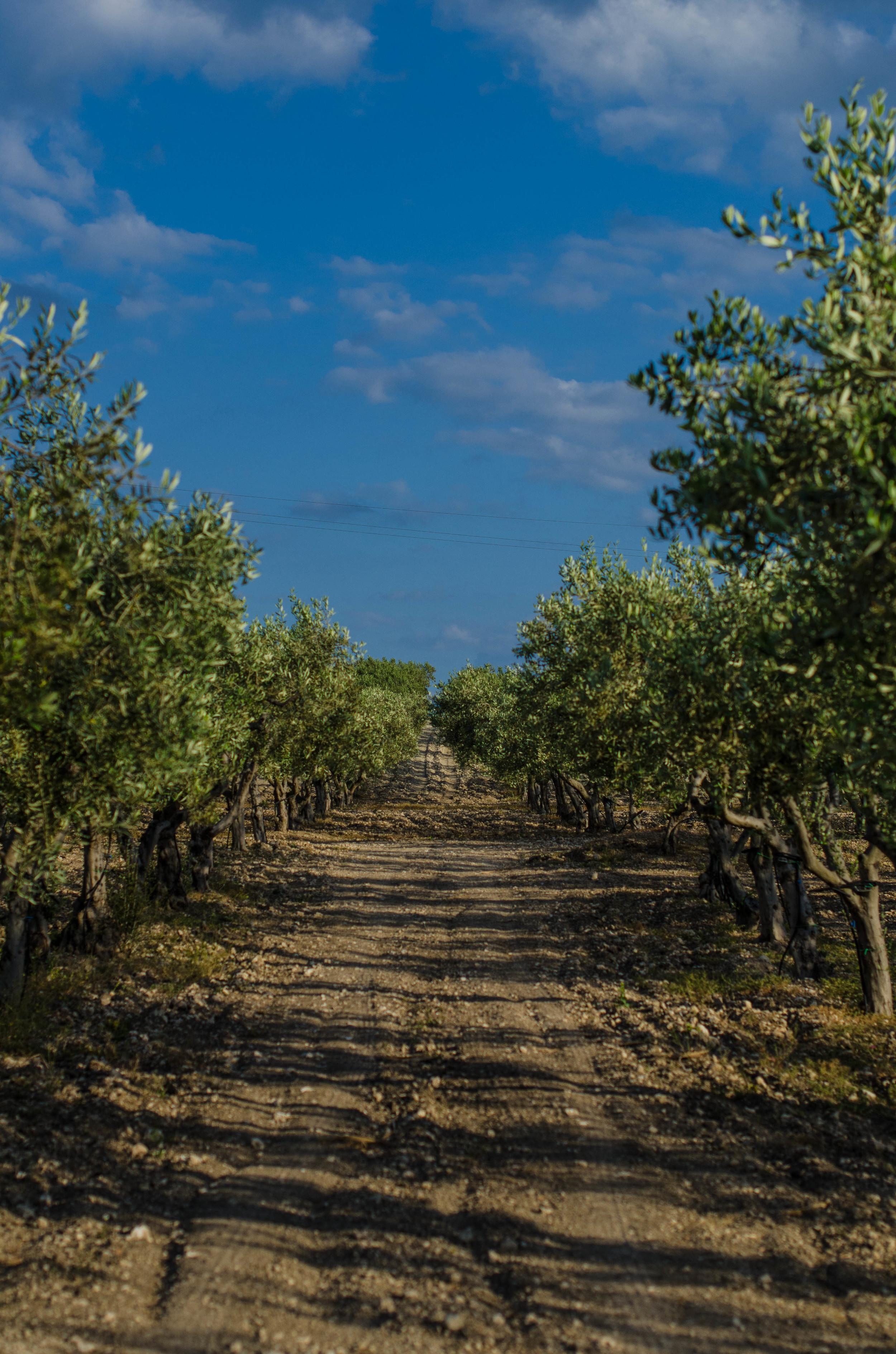 ROSE & IVY Journal Escape Mandranova, Sicily
